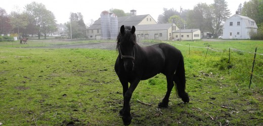 Beautiful horse in Kennebunkport, Maine