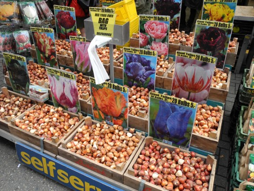 Tulip bulbs for sale in the Flower Market