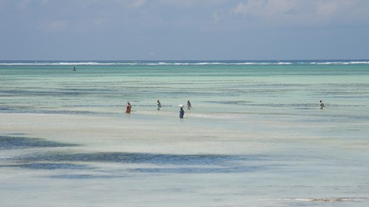 Zanzibari women collect seafood along the coast
