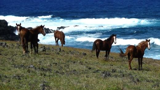 Wild Horses of Rapa Nui