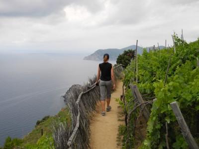 Robin on the trails above Corniglia