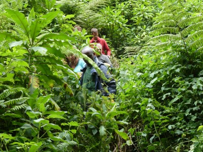 """The group coming down the """"trail"""" we used to follow the gorillas."""