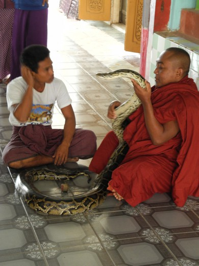 A monk meets one of the pythons.