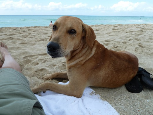 Not the dog who tripped me. This one was my beach buddy.