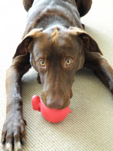 Bruno and his squeaky devil.