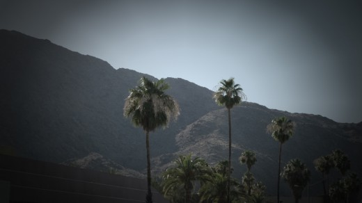 Palm Springs palms.